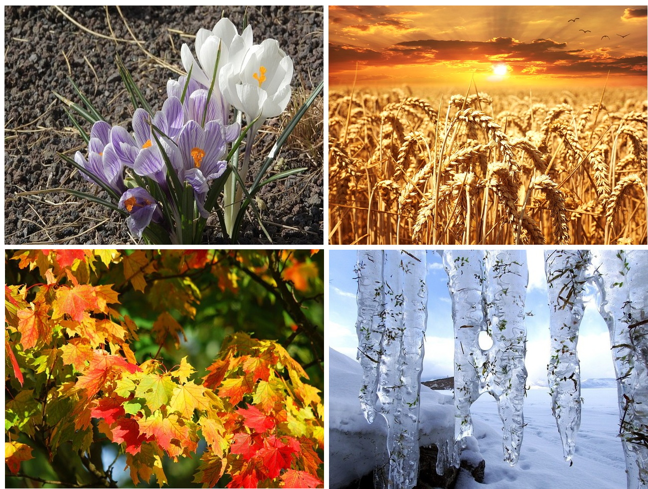 four seasonal landscapes